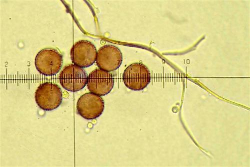 did euro spores 2