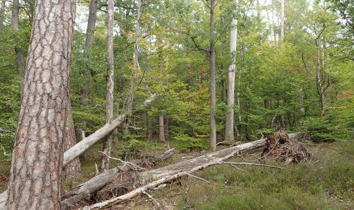 3435 ret lice les pins
