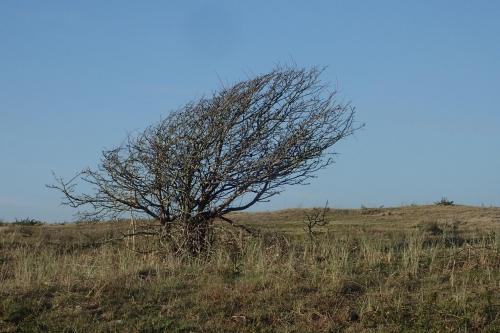 Cotentin4-Biville190210