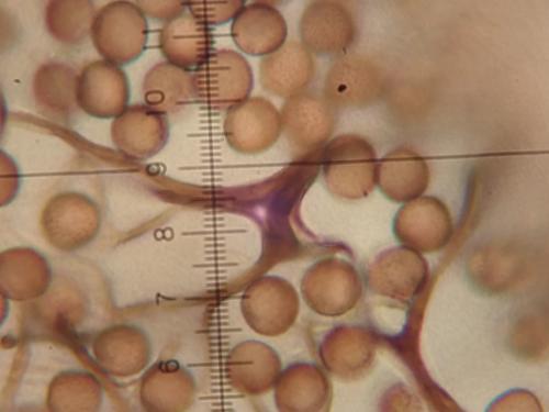 Stem-ir-membrane